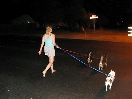dog's walk