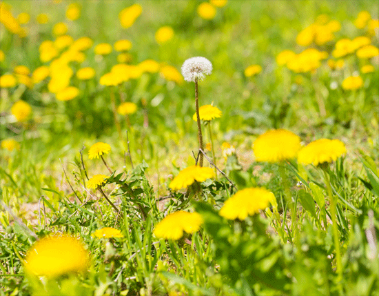 leave-weeds